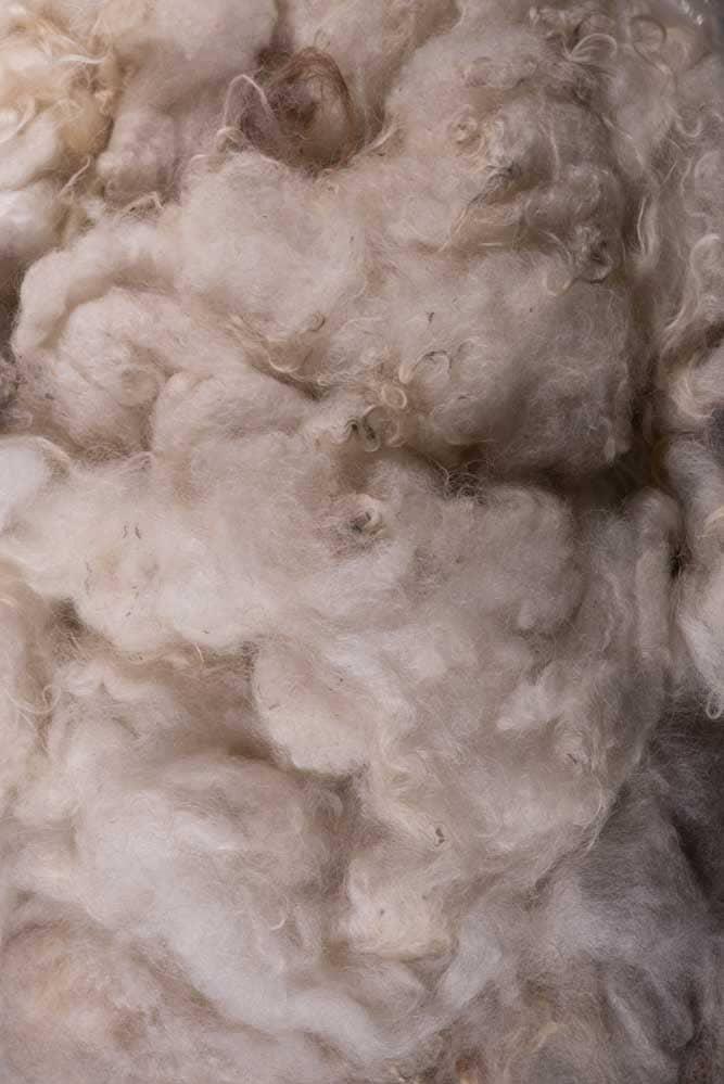 Cream colored Shetland Wool - Thistlehill Farm   Twisted Strait Fibers