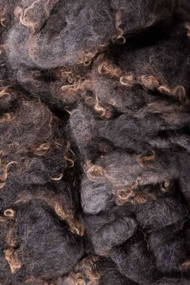 Gray colored Shetland Wool - Thistlehill Farm | Twisted Strait Fibers